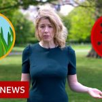 Hay fever or coronavirus: The symptoms compared – BBC News