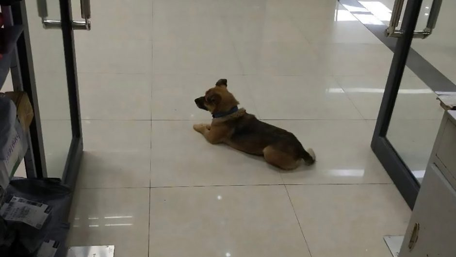 Dog waits at Wuhan hospital after owner's coronavirus death