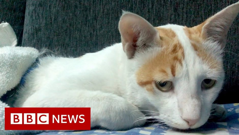 Coronavirus: Treating Delhi's dogs and cats in the pandemic – BBC News