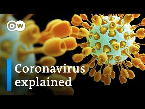 Coronavirus explained: Where it came from and how to stop it   DW News