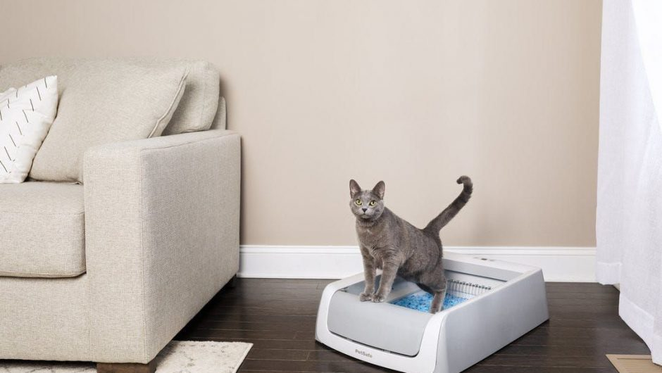 Want to keep spoiling your pets during the coronavirus pandemic? Here's the latest in 'pet tech'