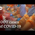Coronavirus infects more than 1000 at German meat-processing plant | DW News